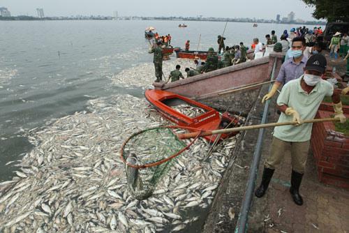 Hà Nội vớt hơn 60 tấn cá chết ở Hồ Tây trong 3 ngày - 3