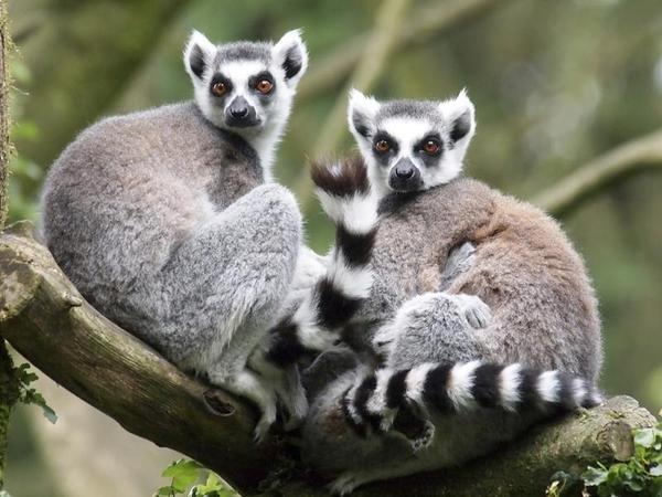 Bất ngờ về loài động vật hung dữ nhất hành tinh - 3