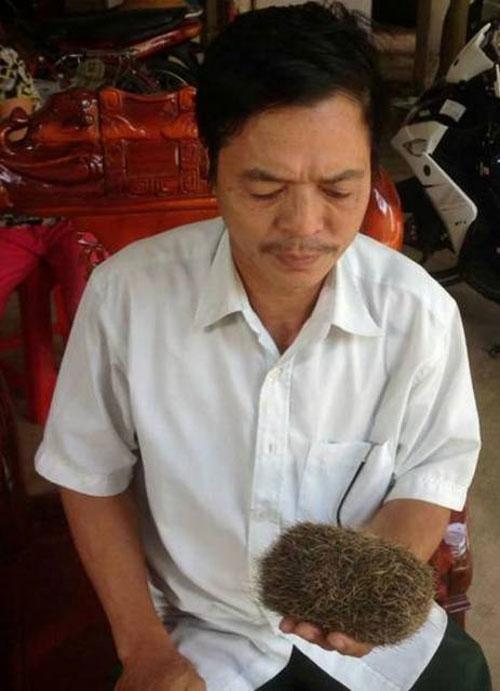 Nghệ An: Phát hiện cát lợn tiền tỉ trong bụng lợn nái - 2