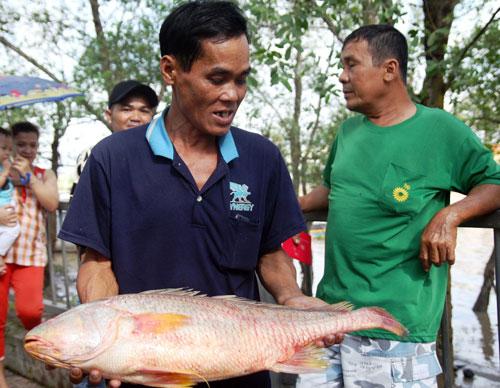 Ngư dân bắt được con cá toàn thân vàng óng quý hiếm - 1