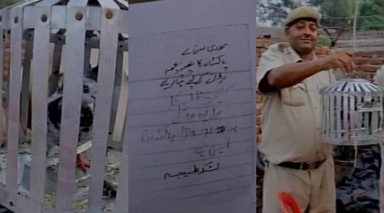Bồ câu bị bắt giam vì đưa thư đe dọa Thủ tướng Ấn Độ - 2