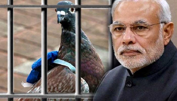 Bồ câu bị bắt giam vì đưa thư đe dọa Thủ tướng Ấn Độ - 1