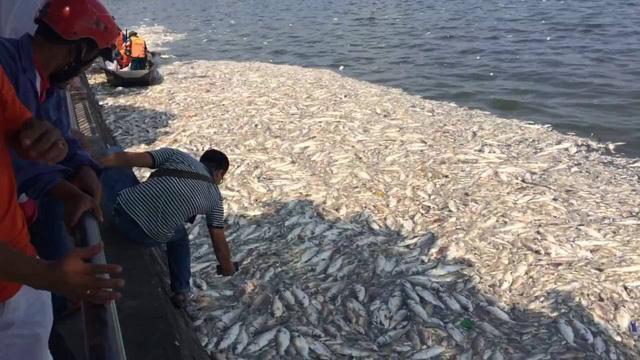Cá Hồ Tây chết hàng loạt: Xác định có 24 cửa xả xuống hồ - 1