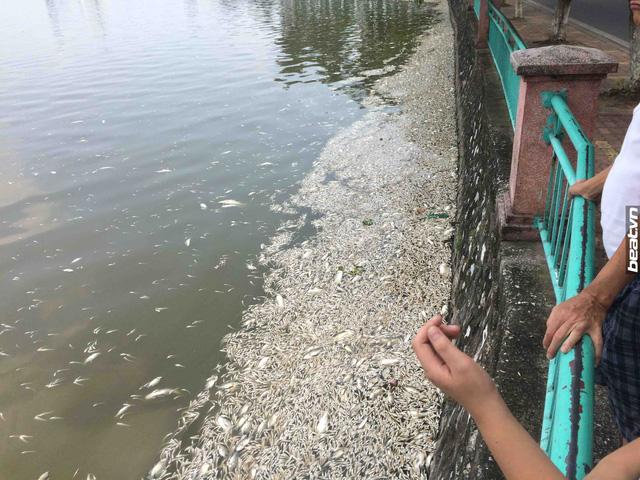 Cá Hồ Tây chết hàng loạt: Xác định có 24 cửa xả xuống hồ - 2