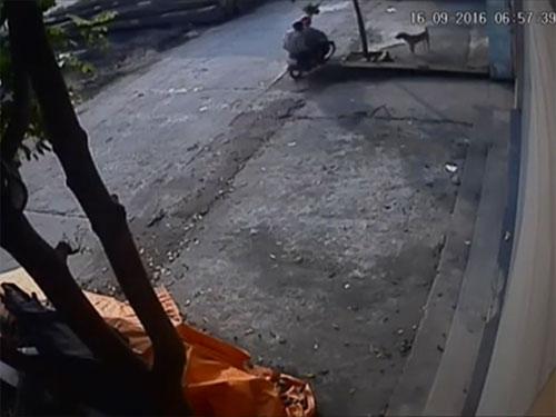 Pha trộm chó chưa đầy 5 giây táo tợn giữa phố Hà Nội - 1