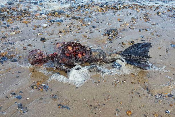 """Xác chết """"người cá"""" dạt vào bờ biển nước Anh - 1"""