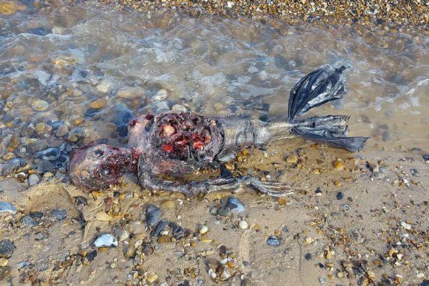 """Xác chết """"người cá"""" dạt vào bờ biển nước Anh - 2"""
