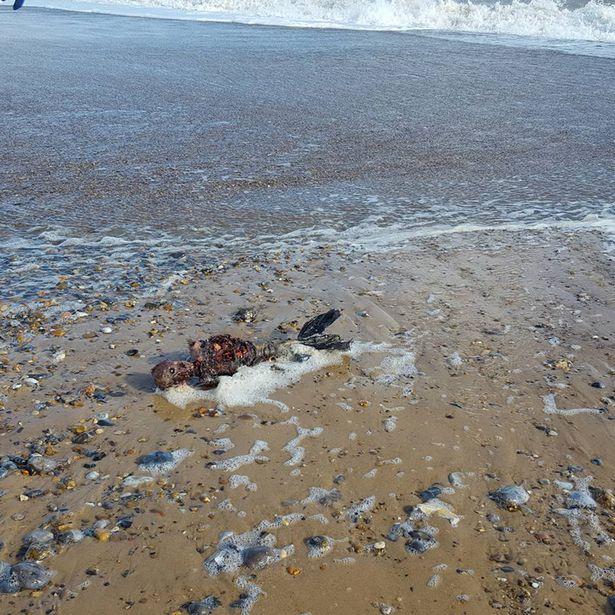 """Xác chết """"người cá"""" dạt vào bờ biển nước Anh - 3"""