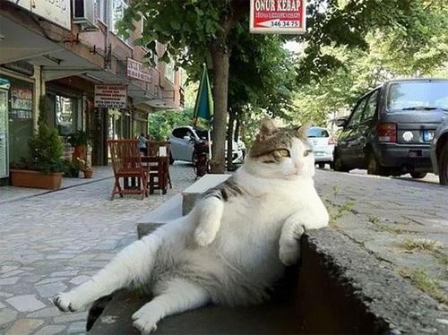 """Chú mèo ngồi """"bá đạo"""" được tạc tượng sau khi qua đời - 1"""