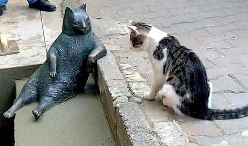 """Chú mèo ngồi """"bá đạo"""" được tạc tượng sau khi qua đời - 6"""