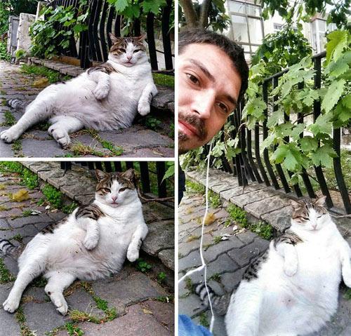 """Chú mèo ngồi """"bá đạo"""" được tạc tượng sau khi qua đời - 3"""