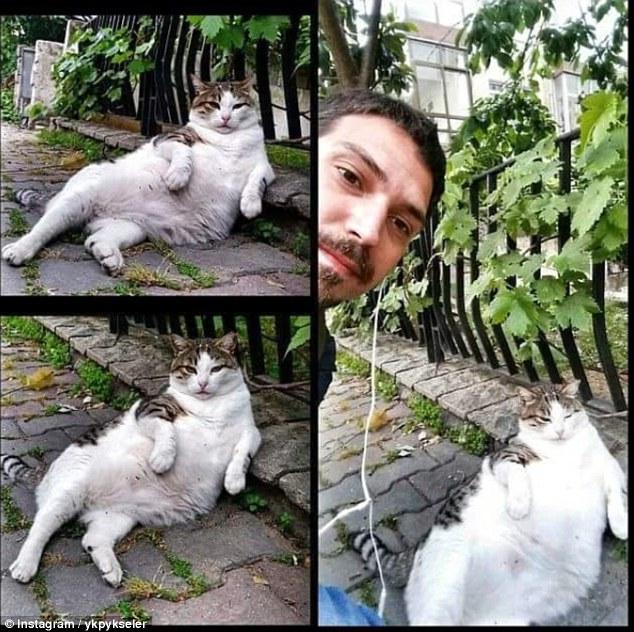 Mèo ú với dáng ngồi oai vệ được dựng tượng sau khi chết - 3