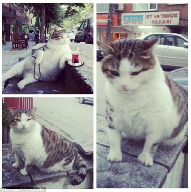 Mèo ú với dáng ngồi oai vệ được dựng tượng sau khi chết - 5