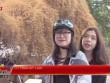Tâm sự buồn về cây hoa giấy gây xôn xao ở Hà Nội
