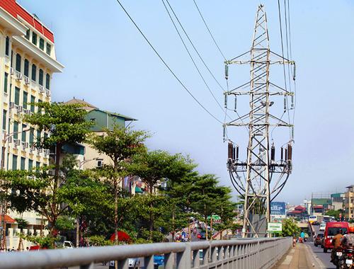 HN: Kỳ lạ hàng trăm cây xanh trồng dưới đường điện cao thế - 1