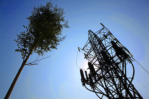 HN: Kỳ lạ hàng trăm cây xanh trồng dưới đường điện cao thế - 3