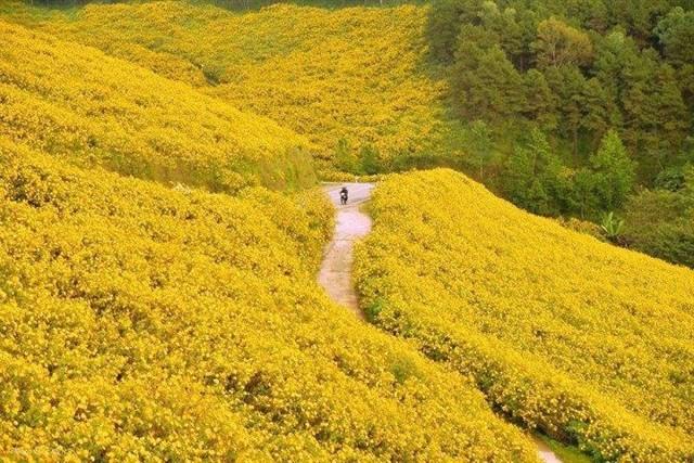 Những cung đường hoa dã quỳ đẹp nao lòng ở Đà Lạt - 3