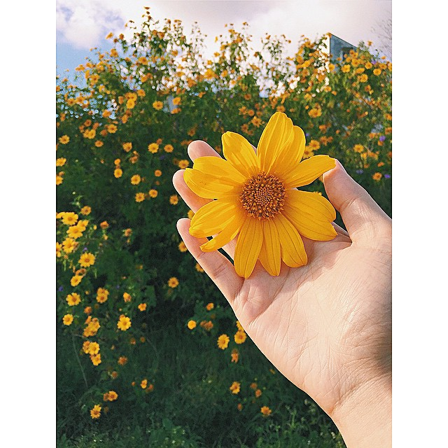 Những cung đường hoa dã quỳ đẹp nao lòng ở Đà Lạt - 2
