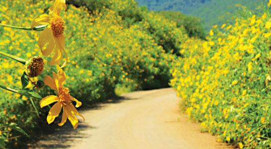 Những cung đường hoa dã quỳ đẹp nao lòng ở Đà Lạt - 1