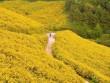 Những cung đường hoa dã quỳ đẹp nao lòng ở Đà Lạt