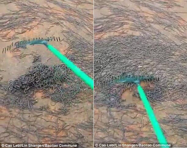 Kinh hãi cảnh hàng triệu giun đất chui lên tấn công trường học - 2