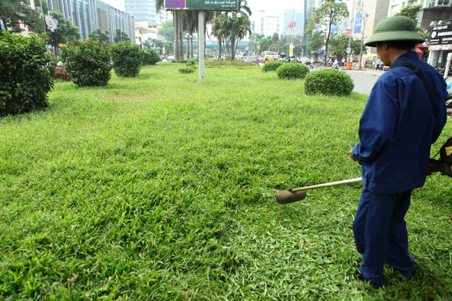 Hà Nội nhộn nhịp cắt cỏ trở lại sau 3 tháng tạm dừng - 1