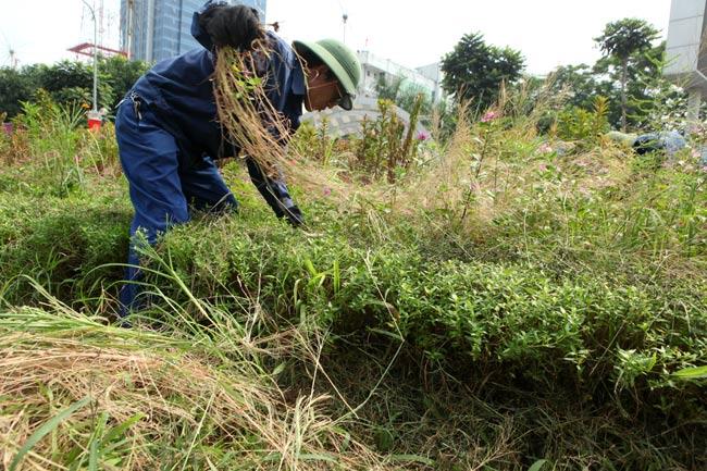 Hà Nội nhộn nhịp cắt cỏ trở lại sau 3 tháng tạm dừng - 9