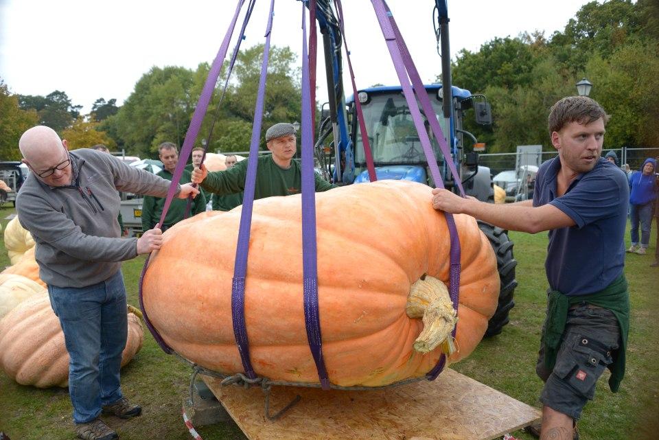 Quả bí ngô khổng lồ nặng 1 tấn phá kỉ lục nước Anh - 1