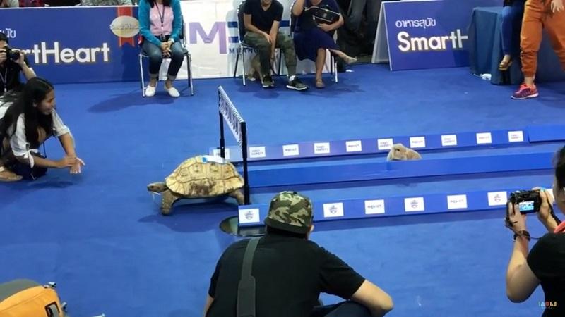 Tức cười cuộc chạy thi giữa thỏ và rùa ngoài đời thực - 2