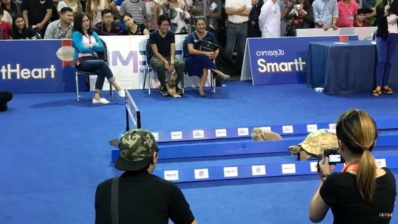 Tức cười cuộc chạy thi giữa thỏ và rùa ngoài đời thực - 1