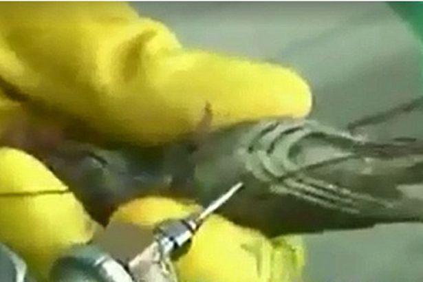 Vụ tôm sú Việt Nam bị tiêm tạp chất lên báo nước ngoài - 2