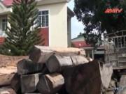 Video An ninh - Lâm tặc táo tợn cướp gỗ, dọa giết trưởng công an xã