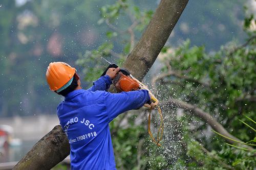 """HN: Bắt đầu di dời hơn 100 """"cụ cây"""" trên đường Kim Mã - 5"""