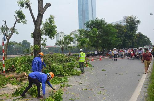 """HN: Bắt đầu di dời hơn 100 """"cụ cây"""" trên đường Kim Mã - 8"""