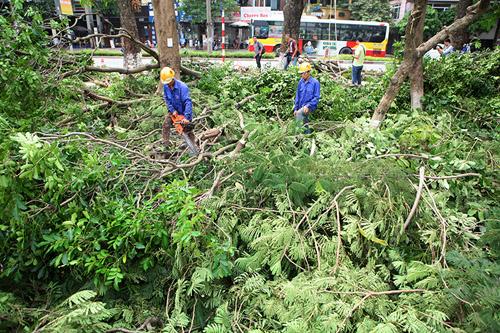"""HN: Bắt đầu di dời hơn 100 """"cụ cây"""" trên đường Kim Mã - 6"""