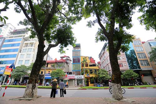 """HN: Bắt đầu di dời hơn 100 """"cụ cây"""" trên đường Kim Mã - 9"""