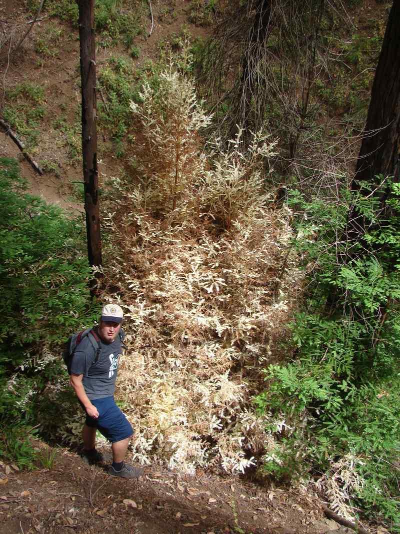 """Bí ẩn """"cây ma"""" sống không cần quang hợp trong rừng - 3"""