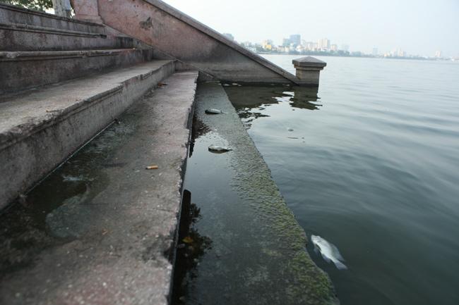Hồ Tây sau hơn 10 ngày cá chết hàng loạt - 3