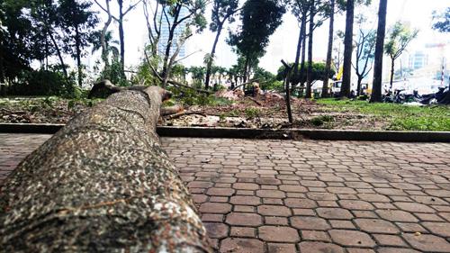 Hàng loạt cây ở trung tâm SG bứng dưỡng để thi công nhà ga - 6
