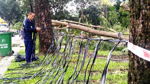 Hàng loạt cây ở trung tâm SG bứng dưỡng để thi công nhà ga - 8