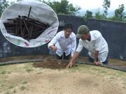 Tin tức trong ngày - Vụ hàng ngàn ngôi mộ bị đóng đinh: Hé lộ manh mối