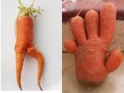 Tranh vui - Sốc với những củ cà rốt kỳ dị nhất thế giới