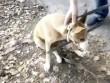 Giải cứu chó mắc kẹt trong hốc tường lạnh giá suốt 3 năm