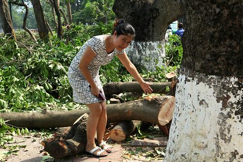 Tiếc nuối hàng cây Kim Mã, dân nhặt vỏ cây làm kỉ niệm - 2