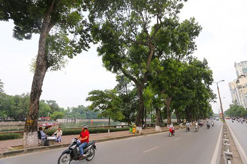 Tiếc nuối hàng cây Kim Mã, dân nhặt vỏ cây làm kỉ niệm - 1