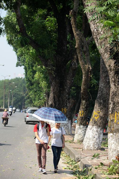 Tiếc nuối hàng cây Kim Mã, dân nhặt vỏ cây làm kỉ niệm - 4