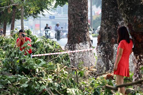Tiếc nuối hàng cây Kim Mã, dân nhặt vỏ cây làm kỉ niệm - 3