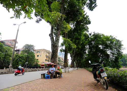 Tiếc nuối hàng cây Kim Mã, dân nhặt vỏ cây làm kỉ niệm - 7