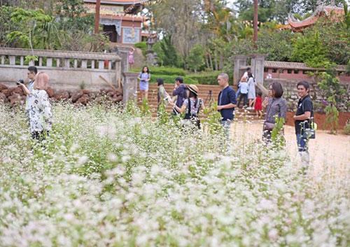 Vườn hoa hoa tam giác mạch đẹp mơ màng giữa Đà Lạt - 2