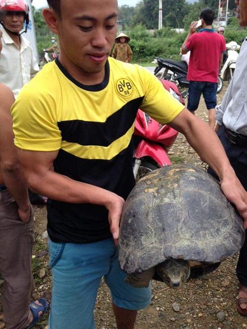 Cụ rùa trăm tuổi, nặng gần 14kg đi lạc vào nhà dân - 2